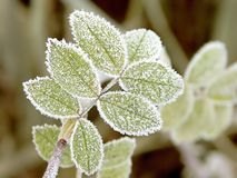 Autumnal frost on a leaves. Fall foliage with morning frost in the garden Royalty Free Stock Photo