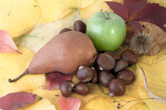 Autumnal fruit composition Royalty Free Stock Images