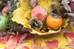 Autumnal fruit composition in a basket Stock Images