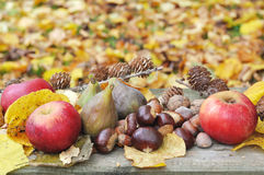 Autumnal fruit in leaves Stock Image