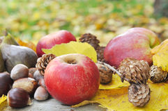 Autumnal fruit in yellow leaves Royalty Free Stock Photography