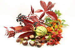 Autumnal Fruits Stock Images