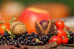 Autumnal fruits Royalty Free Stock Photos