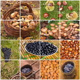 Autumnal fruits Stock Image