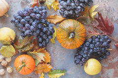 Autumnal fruits  Stock Image