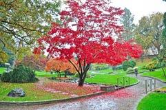 Autumnal garden under the raining Royalty Free Stock Photo
