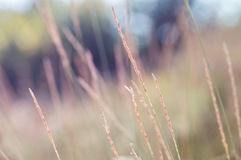 Autumnal grass on a multi-colored background. stock photos