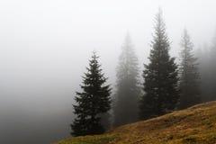 Hillside of spruce trees diminishing in dense fog. Autumnal grassy hillside of spruce trees diminishing in dense fog stock photography