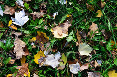 Autumnal ground Royalty Free Stock Photo