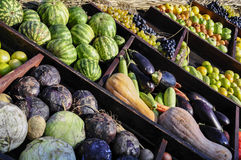 Autumnal harvest Stock Photography