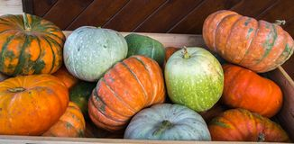 Autumnal harvest of ripened yellow, orange, green pumkins. Motley crop of pumpkins. stock photos