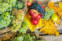 Autumn still life with harvest in leaves. Autumnal harvest still life with apples, pears, grapes, nuts and berries in foliage on wooden board. horizontal royalty free stock photos