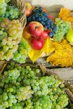 Autumn still life with harvest in leaves. Autumnal harvest still life with apples, pears, grapes, nuts and berries in foliage on wooden board. vertical stock images