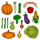 Autumnal harvest vegetables vintage sketch icons Stock Images
