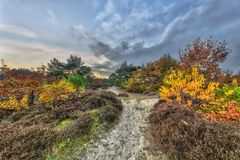 Autumnal heathland trail Stock Photography