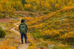 Autumnal hiker Royalty Free Stock Photo