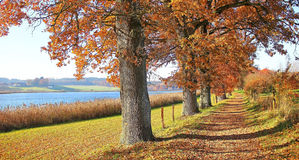 Autumnal hiking trail with gnarled oak trees Royalty Free Stock Photography