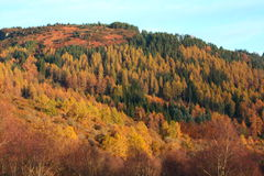 Autumnal hills of Scotland. Autumnal hills with forests in Scotland Stock Photo