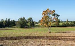 Autumnal motif Stock Images