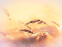 Autumnal idyll in meadow Stock Images