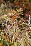 The autumnal impression Stock Photo