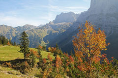 Autumnal karwendel valley, view to mountain range, austrian lan. Autumnal forest and trees at karwendel valley, view to mountain range, austrian landscape royalty free stock image