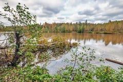 Autumnal lake Royalty Free Stock Photo