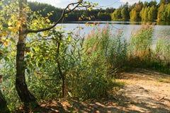Autumnal lake Royalty Free Stock Image