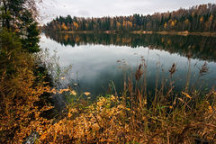 Autumnal lake near the forest Royalty Free Stock Images