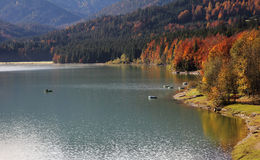 Autumnal lake shore, artificial lake sylvenstein Stock Image