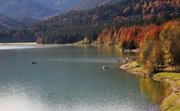 Autumnal lake shore, artificial lake sylvenstein Stock Image