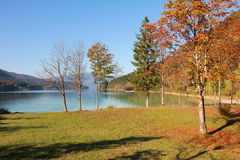 Autumnal lake shore of walchensee, bavaria Royalty Free Stock Image