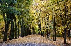 Autumnal landscape Royalty Free Stock Photos