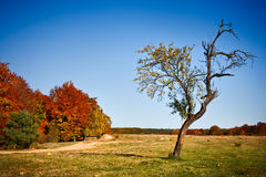Autumnal landscape Stock Photos