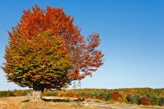 Autumnal landscape Royalty Free Stock Photo