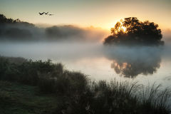 Autumnal landscape of birds over misty lake Stock Image