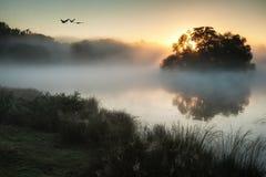 Autumnal landscape of birds over misty lake