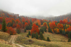 Autumnal landscape with colorful forest and countryside road in Royalty Free Stock Photo