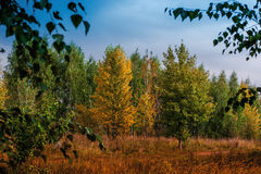 Autumnal landscape with colorful trees horizontal Stock Images