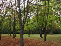 Autumnal landscape, dried leaves in a park on cloudy day stock photo