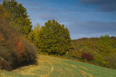 Autumnal landscape Stock Photography