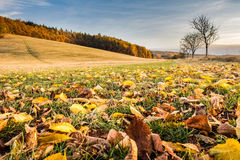 Autumnal landscape with fallen leaves, trees and blue sky Stock Photos