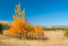 Autumnal landscape with family birch on Ai-Petri mountain tableland Royalty Free Stock Photos