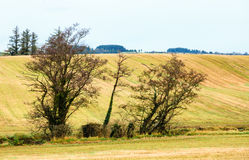 Autumnal landscape fields scenery in Ireland. Royalty Free Stock Image