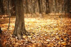 Autumnal landscape with forest Stock Photo