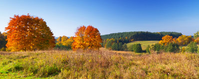 Autumnal landscape of idyllic meadow. Autumnal scenery of forest and meadow in Poland Royalty Free Stock Images