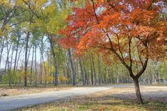 Autumnal park. The autumnal landscape of Jinci Park in Taiyuan, Shanxi, China stock image