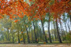 Autumnal park. The autumnal landscape of Jinci Park in Taiyuan, Shanxi, China stock images