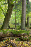 Autumnal landscape of natural forest Stock Photo