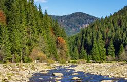 Autumnal landscape with river in spruce forest. Autumnal landscape with narrow river in spruce forest. beautiful nature scenery mountainous area under blue sky Royalty Free Stock Images
